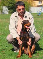 Foto 2 Top Dobermann Welpen zum Verkauf