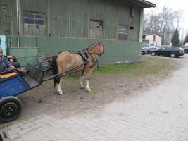 Foto 2 Top Pony Gig mit Geschirr , komplett