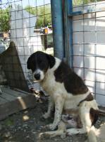 Foto 3 Toto (geb. 2005)
