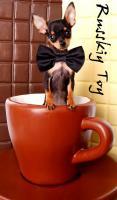 Toy Terrier kleine Welpen abzugeben. (Russkiy Toy MINI)