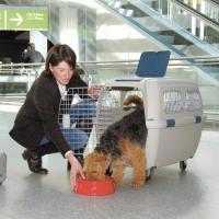 Transportbox für großen Hund (Deutsch.Schäferhund) neu.