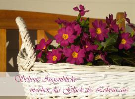 Foto 14 Traum-Ferienwohnung mit Wintergarten im grünen Herzen von Allgäu, Bodensee und Oberschwaben