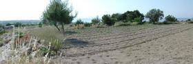 Foto 2 Traumgrundstueck auf Egina/Griechenland