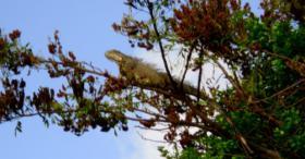 Foto 7 Traumgrundstueck in der Karibik (Belize)
