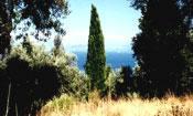Traumgrundstueck auf Korfu/Griechenland