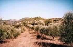 Traumgrundstück auf dem Peloponnnes/Griechenland