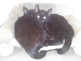 Traumhafte Katze wegen Platzmangel zu verschenken!
