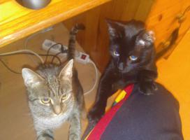 Foto 5 Traumhafte Katze wegen Platzmangel zu verschenken!