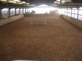 Foto 4 Traumlaufstall für Ihr Pferd!