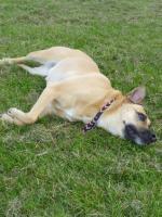Trickdogging-Dogdance-Frisbee-Begleithundevorbereitung