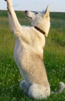Foto 2 Trickdogging-Dogdance-Frisbee-Begleithundevorbereitung
