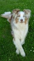 Foto 3 Trickdogging-Dogdance-Frisbee-Begleithundevorbereitung