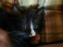 Foto 8 Türkisch-Angora -Mix-Katze 12 w.