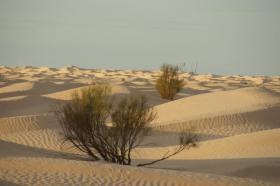 Foto 2 Tunesien / Sahara