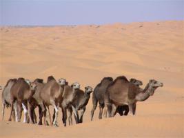 Foto 3 Tunesien / Sahara