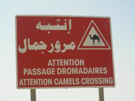 Foto 6 Tunesien / Sahara