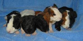Foto 4 US-Teddys abzugeben