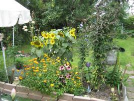 Foto 2 -Übernahme eines gepachteten Garten in Frankfurt am Main-