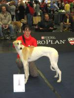 Foto 4 Ungarischer Windhund - JUNIOR WORLD WINNER 2012