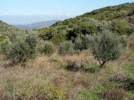 Unser Angebot auf der Insel Evia