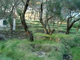 Foto 2 Unser Angebot auf der Insel Othoni/nahe Korfu/Griechenland