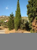 Foto 2 Unser Angebot in Schinias/Halbinsel Attika, nahe Athen/Griechenland