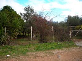 Foto 2 Unser Angebot in der Stadt Agrinio/Griechenland