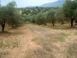 Unser Angebot nahe der Ortschaft Amarynthos/Griechenland