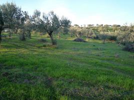 Unser Angebot nahe der Ortschaft Pelei/Griechenland