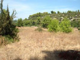 Unser Angebot nahe der Ortschaft Tragana/Griechenland