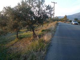Unser Angebot nahe der Ortschaft Tragea/Griechenland
