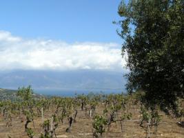 Unser Angebot nahe der Stadt Egion/Peloponnes/Griechenland