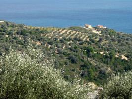 Unser Angebot nahe der Stadt Kymi auf Evia/Griechenland