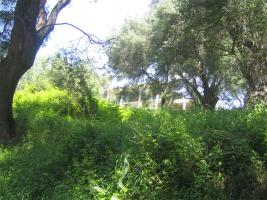 Foto 3 Unser Angebot nahe der schoenen Ortschaft Perdika/Epirus/Griechenland