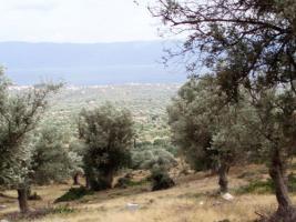 Unser Neubau Angebot auf der Insel Evia/Griechenland