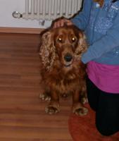 Unser Pflegehund Marosch sucht ein tolles zu Hause!