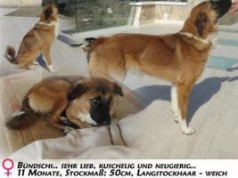 Unsere ''Bündschi'' sucht lustige Familie