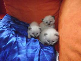 Unsere Kitten d�rfen Umziehen