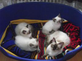 Foto 2 Unsere Kitten d�rfen Umziehen