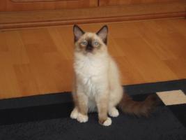 Foto 4 Unsere Kitten d�rfen Umziehen