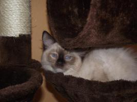 Foto 5 Unsere Kitten dürfen Umziehen