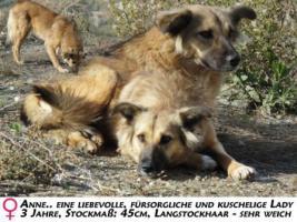 Unsere Liebevolle Hundemama ''Anne'' sucht ein neues zu Hause