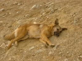 Foto 2 Unsere Liebevolle Hundemama ''Anne'' sucht ein neues zu Hause