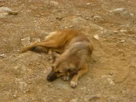 Foto 3 Unsere Liebevolle Hundemama ''Anne'' sucht ein neues zu Hause