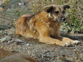 Foto 6 Unsere Liebevolle Hundemama ''Anne'' sucht ein neues zu Hause