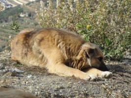 Foto 7 Unsere Liebevolle Hundemama ''Anne'' sucht ein neues zu Hause