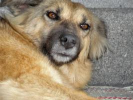 Foto 9 Unsere Liebevolle Hundemama ''Anne'' sucht ein neues zu Hause