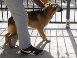Foto 11 Unsere Liebevolle Hundemama ''Anne'' sucht ein neues zu Hause