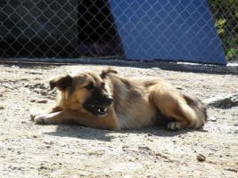 Foto 12 Unsere Liebevolle Hundemama ''Anne'' sucht ein neues zu Hause