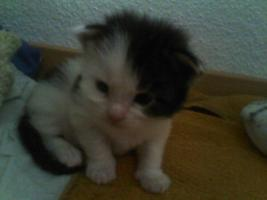 Foto 2 Unsere Main Coon Cats of the Caribbean sind gelandet